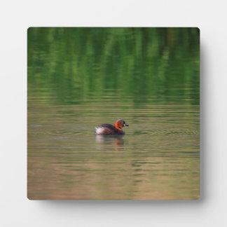 Ente des kleinen Grebe in züchtendem Gefieder Fotoplatte