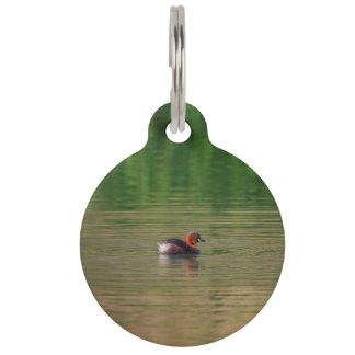 Ente des kleinen Grebe in züchtendem Gefieder Haustiermarke