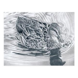 Ente im Fluss - Bleistiftzeichnung Postkarte