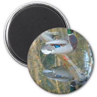 Ente reflektiert runder magnet 5,1 cm