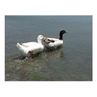 Ente und Gans Postkarte
