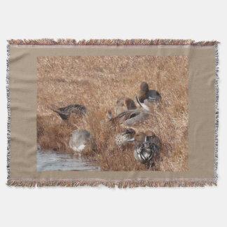 Enten-Vogel-Tier-Tier-Teich-Fotografie Decke