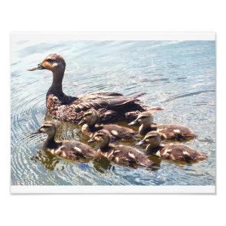 Entlein-und Enten-Fotografie-Drucke Fotografien