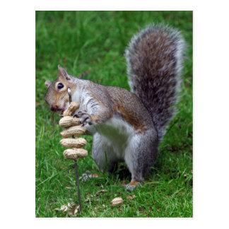 Entschlossenes Eichhörnchen Postkarten