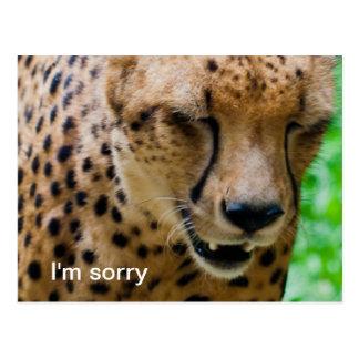 Entschuldigender Gepard Postkarte
