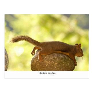 Entspannendes Eichhörnchen