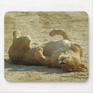 Entspannter Löwe Mousepad