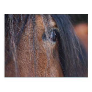 Entwurfs-Pferdepostkarte Postkarte