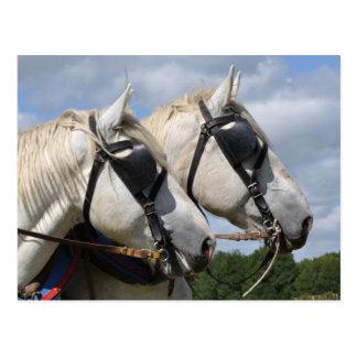 Entwurfspferdeporträt