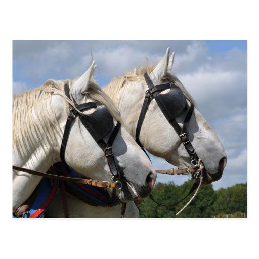 Entwurfspferdeporträt Postkarten