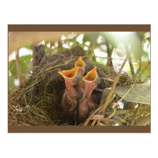 Entzückende Baby-Vögel warteten Postkarte