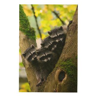 Entzückende Baby-Waschbären Holzdruck