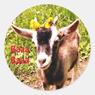 Entzückende Baby-Ziege sagt Baaa Baaa Runder Aufkleber