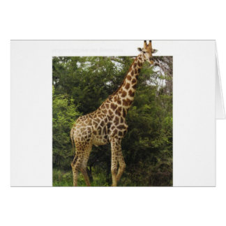 Entzückende Giraffe Karte