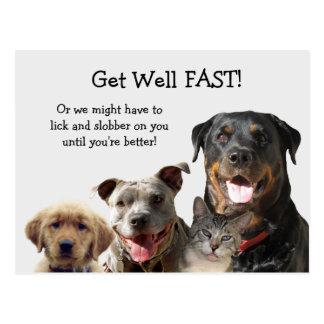 Entzückende Haustiere erhalten wohle Postkarte