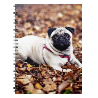 Entzückende Mops-Erholungen auf dem Herbst-Laub Spiral Notizblock