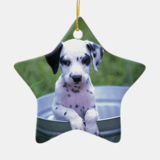 Entzückender dalmatinischer Welpe wartete ein Bad Keramik Stern-Ornament