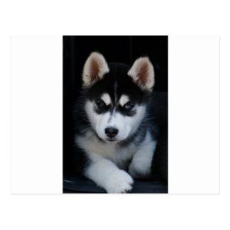 Entzückender Husky-Schlitten-Hundewelpe Postkarte
