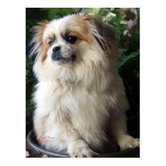 Entzückender langer Haar-Rettungs-Hund Postkarte