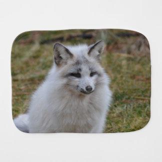 Entzückender weißer Fox Spucktuch