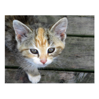 Entzückendes Kätzchen Postkarte