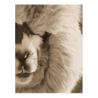 Entzückendes Lama/Alpaka Postkarte