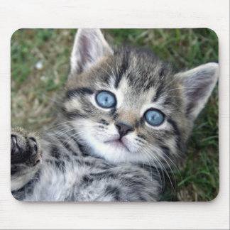 Entzückendes mit blauen Augen silbernes Tabby-Kätz