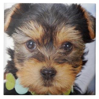 Entzückendes Yorkshire Terrier Keramikfliese