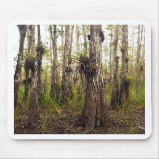 Epiphyte Bromeliad in Florida-Wald Mousepad