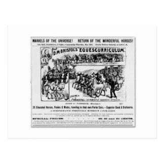 Equescurriculumanzeige D.m. Bristol Postkarte