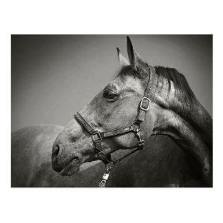 Equus Postkarten
