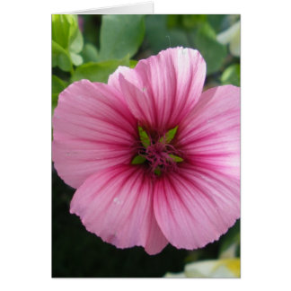 Erblassen Sie - rosa Lavatera Karte
