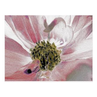 Erblassen Sie - rosa PastellBlume mit gelber Mitte Postkarte