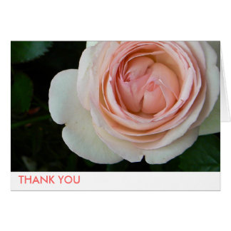 Erblassen Sie - rosa Rose Karte