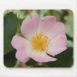 Erblassen Sie - rosa u. weiße Single-Rosen-Blume Mousepads