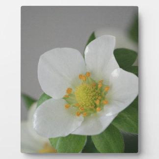 Erdbeerblüte Fotoplatte