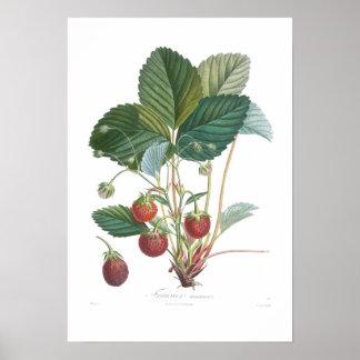 Erdbeere Poster