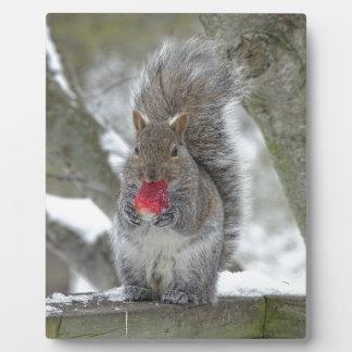 Erdbeereichhörnchen Fotoplatte