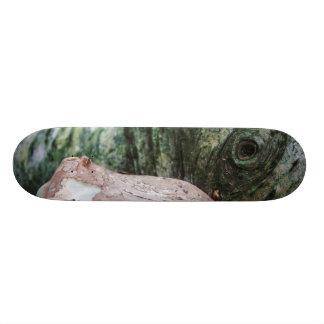 Erdgeschöpf 20,6 Cm Skateboard Deck