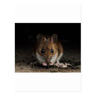 Erdnuss die hölzerne Maus Postkarte