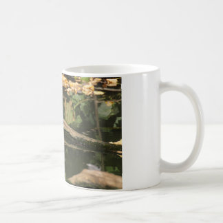 Erithacus rubecula kaffeetasse