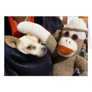 Ernie der Socken-Affe und die Chihuahua kardieren Karte