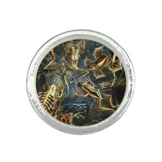 Ernst Haeckel-Amphibien-Frösche und Eidechsen Ring