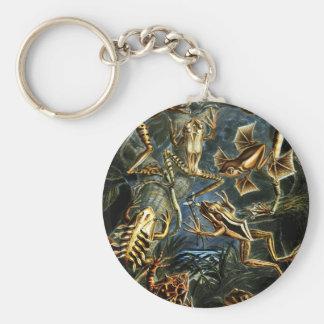 Ernst Haeckel-Amphibien-Frösche und Eidechsen Schlüsselanhänger