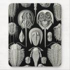 Ernst Haeckel Aspidonia Mousepad