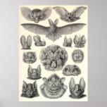 Ernst Haeckel - Chiroptera-Schläger Posterdrucke