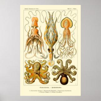 Ernst Haeckel-Kraken-Plakat Poster