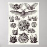 Ernst Haeckel-Kunst-Druck: Chiroptera Poster