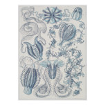 Ernst Haeckel-Kunst-Druck: Ctenophorae Poster