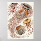 Ernst Haeckel-Kunst-Druck: Discomedusae Poster